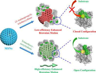 Controlling the speed of enzyme motors brings biomedical applications of nanorobots closer