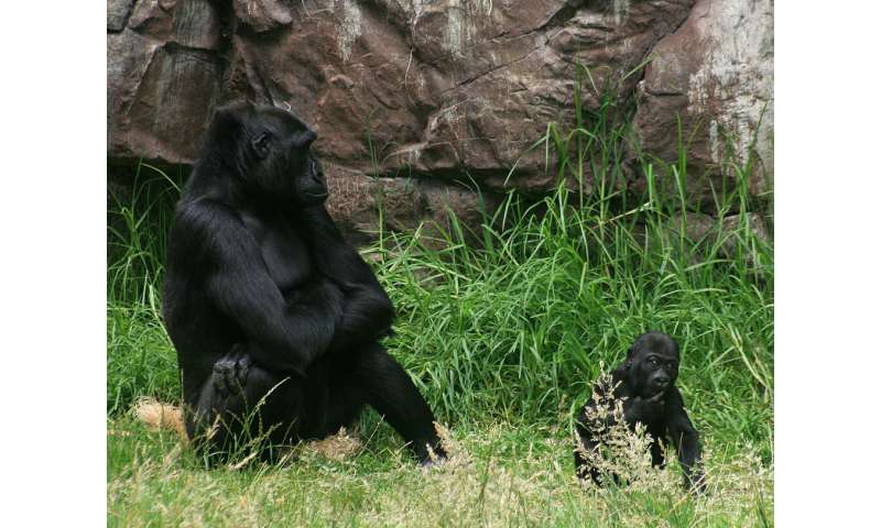Scientists call for a new perspective for population management of animals in zoos