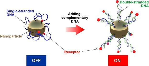 Scientists create supersensitive nanomaterials for DNA diagnostics and targeted drug delivery