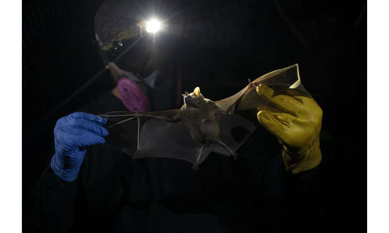 Scientists focus on bats for clues to prevent next pandemic