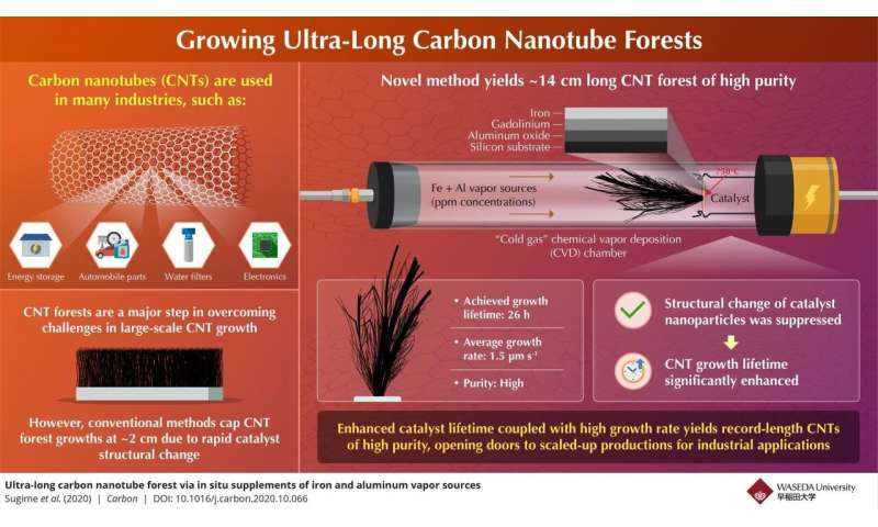 The scientists planted carbon nanotubes for much longer than any other forest