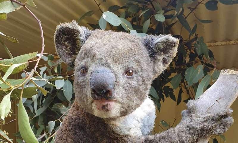Scientists seek rare species survivors amid Australia flames