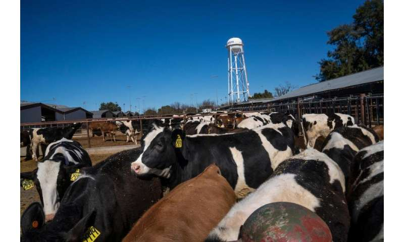 Study examines environmental footprint of California dairy cows over 50 years