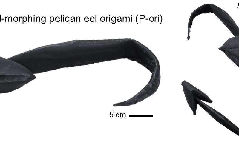 A pelican eel-inspired robotic architecture that embodies origami unfolding and skin stretching mechanisms