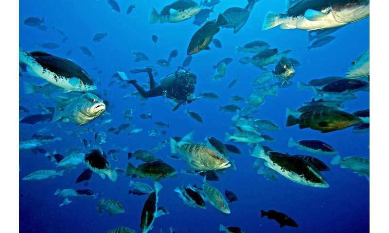 Collaborative conservation approach for endangered reef fish yields dramatic results