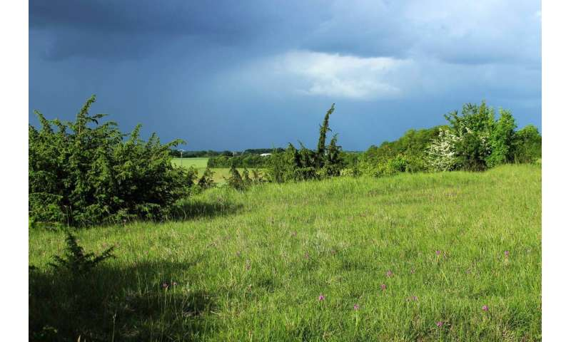 When the past catches up on you: Land-use impacts biodiversity in the long-term
