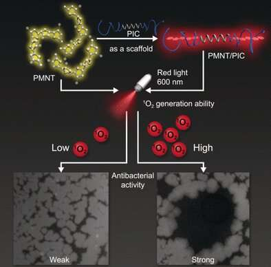 Biomimetic hydrogel with photodynamic antimicrobial effect