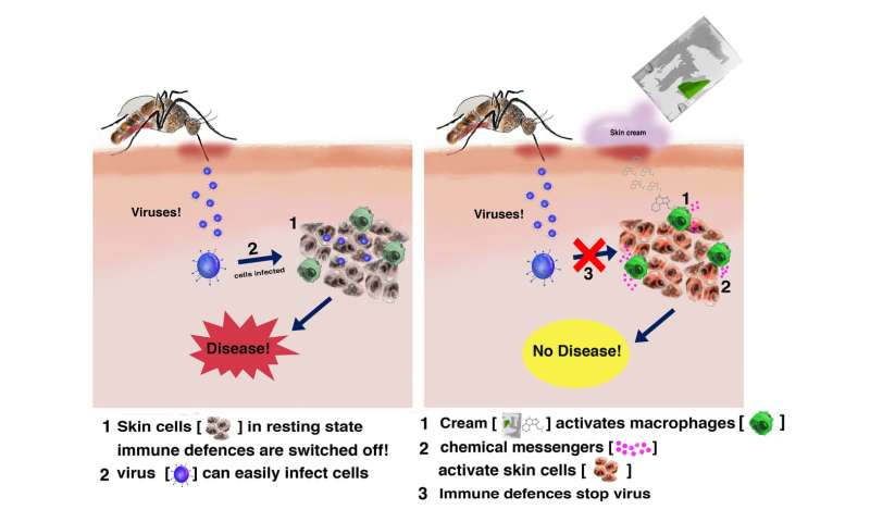 Mosquito-borne diseases could be prevented by skin cream