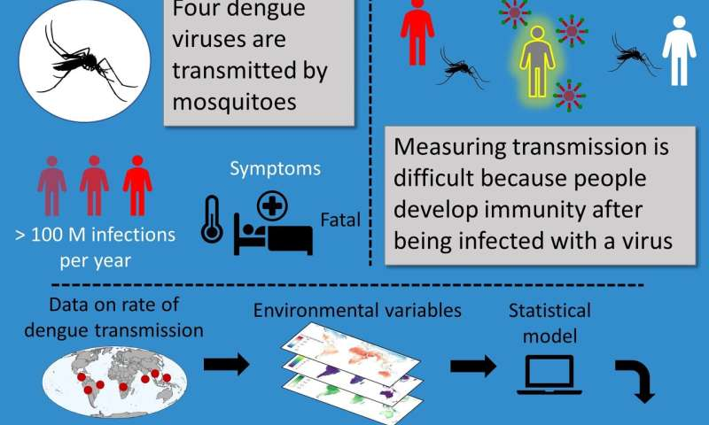 Releasing artificially-infected mosquitoes could reduce global dengue cases by 90%