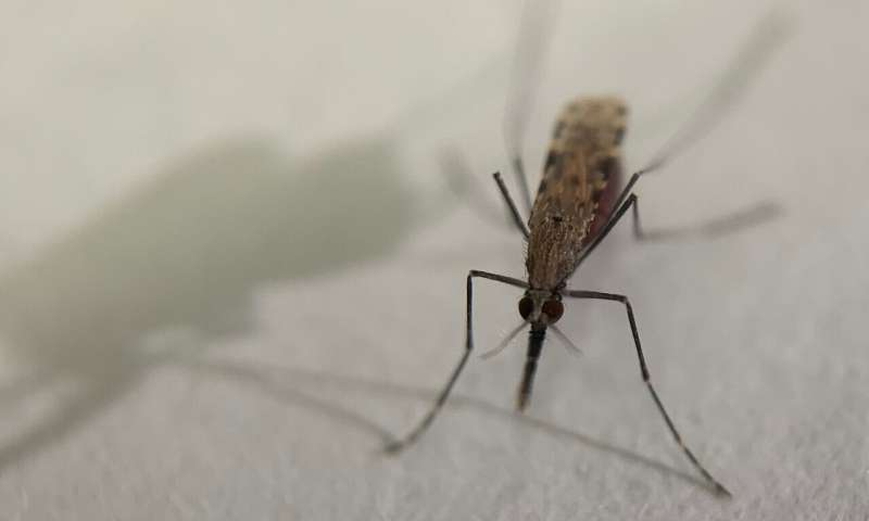 How mosquitoes find humans to bite