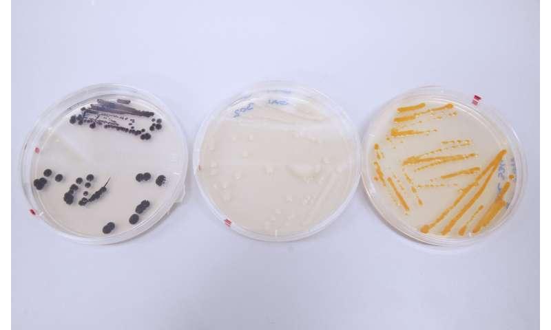 Bacteria genes help researchers keep track of human environmental impact in oceans