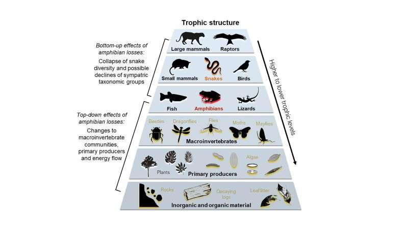 When frogs die off, snake diversity plummets
