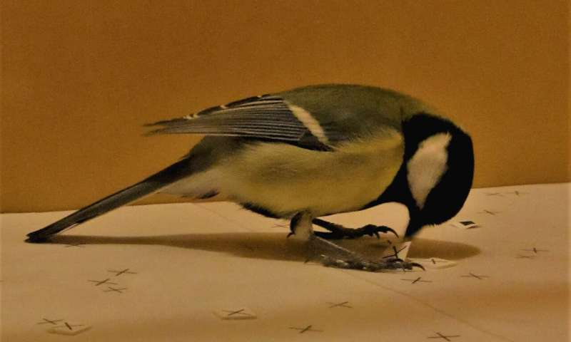 Watching TV helps birds make better food choices