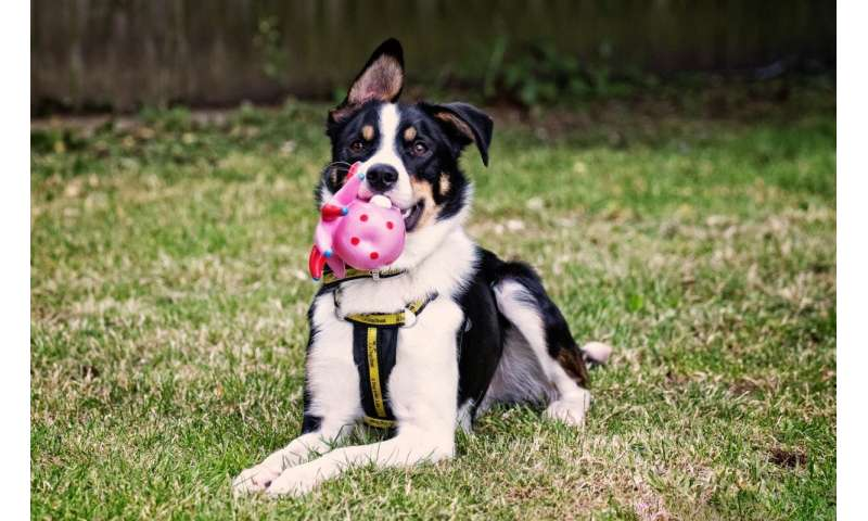 Study shows how dogs can benefit from scented toys