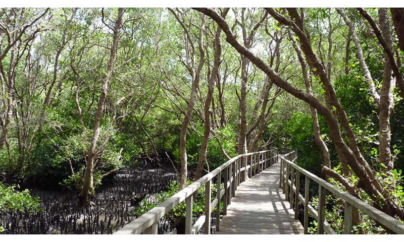 Study suggests that mangrove forests provide cause for conservation optimism (Update)