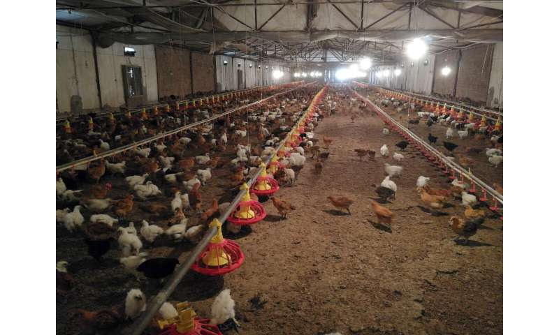 Association found between avian influenza spread and live poultry trade