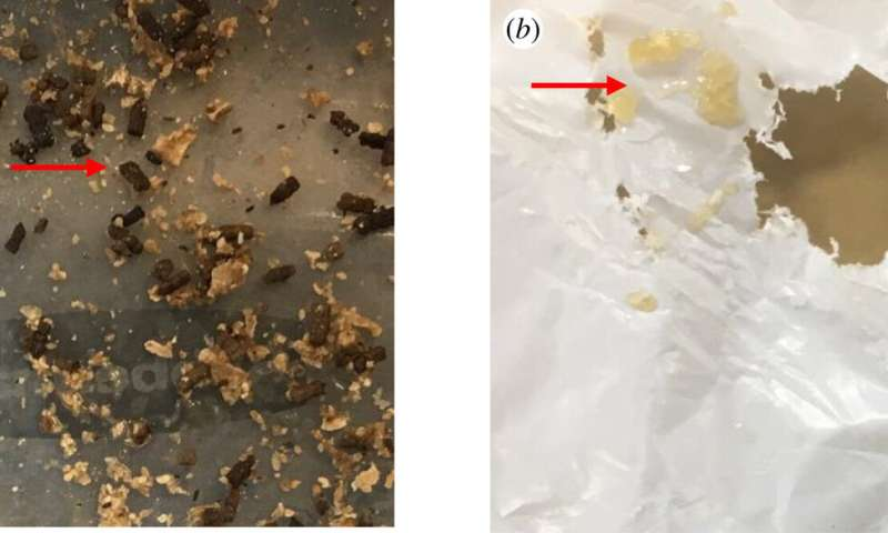 Greater wax moth caterpillar larvae found to be 'plastivores' that consume and metabolize polyethylene