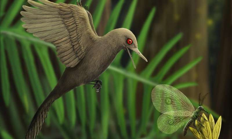 Discovery of smallest known mesozoic dinosaur reveals new species in bird evolution