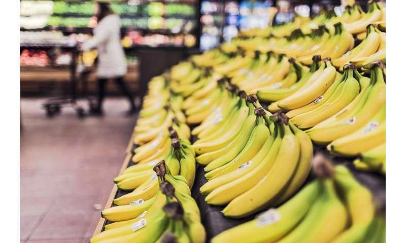 Wood-based catalyst to keep fruit fresh