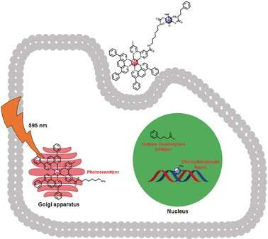 Chemotherapy and photodynamic therapy combined in a single drug to fight resistant cancers