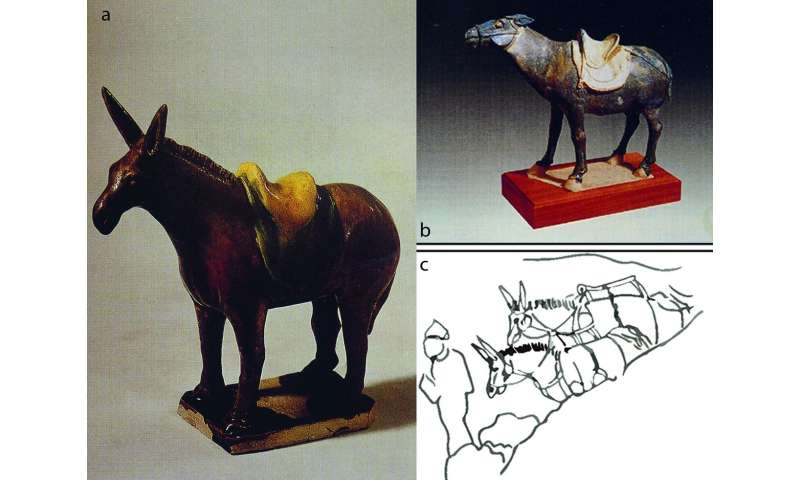 Tang Dynasty noblewoman buried with her donkeys, for the love of polo