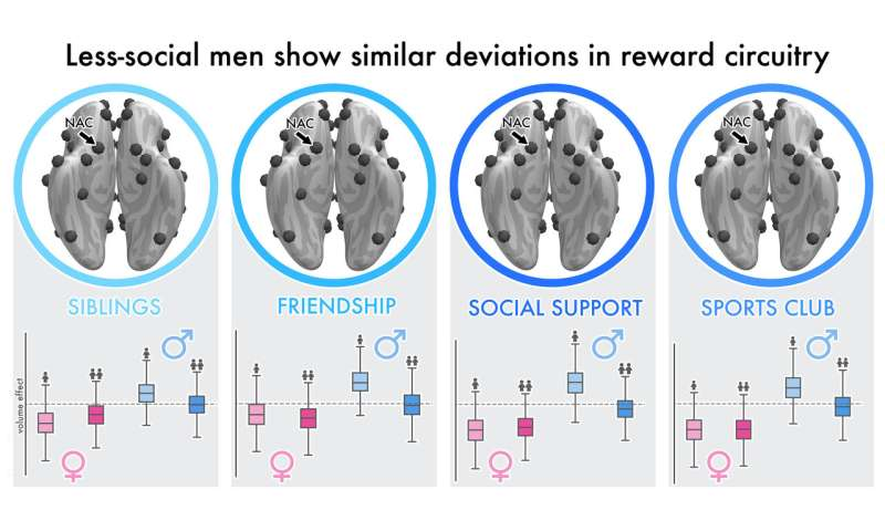 Study shows major gender differences in the human social brain