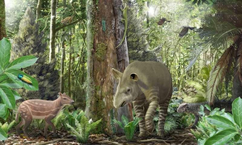 Small horses got smaller, big tapirs got bigger 47 million years ago