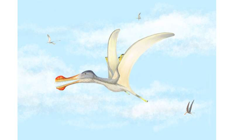 Fossil finds give clues about flying reptiles in the Sahara 100 million years ago