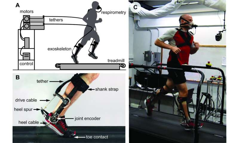 Engineers find ankle exoskeleton aids running