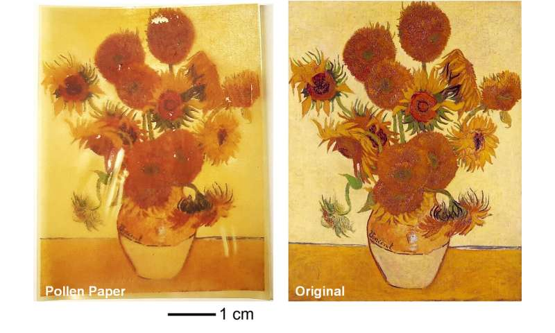 Pollen-based 'paper' holds promise for new generation of natural components