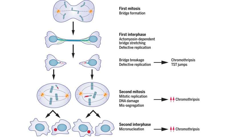 Single error during cell division can trigger cascade of mutational events, generating features of cancer genomes