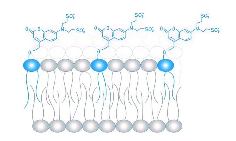 The Lipid Code: New chemical tools can control the concentration of lipids in living cells
