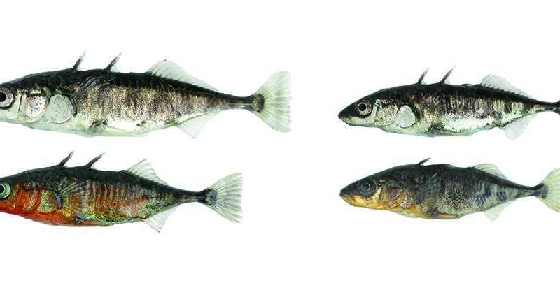 Rapid evolution in fish: genomic changes within a generation