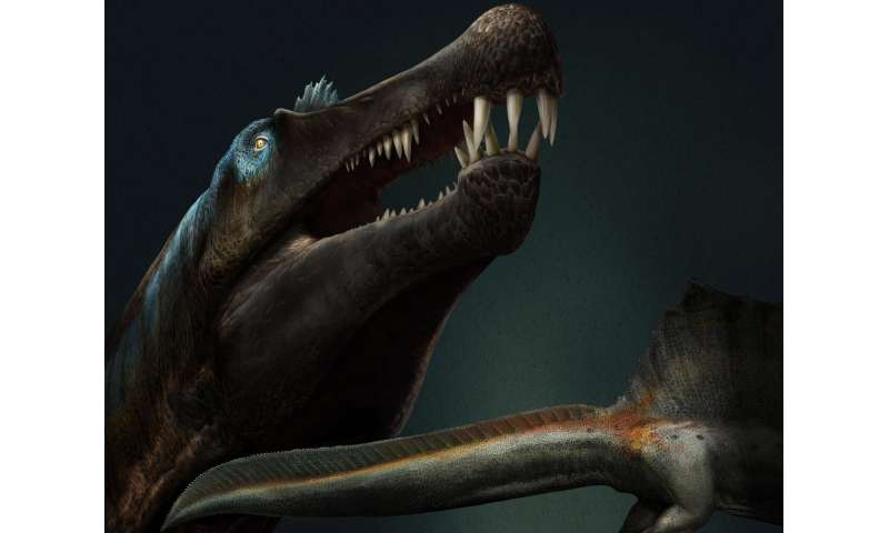 New fossils rewrite the story of dinosaurs and change the appearance of Spinosaurus