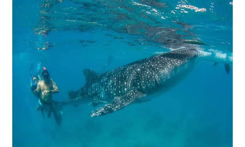 Ecotourism transforms attitudes to marine conservation