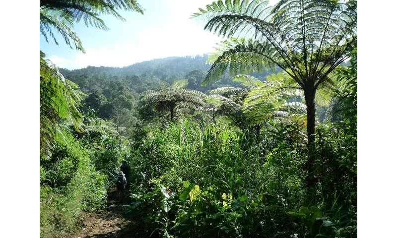 Medicinal plants thrive in biodiversity hotspots