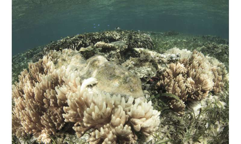 Scientists successfully develop 'heat resistant' coral to fight bleaching
