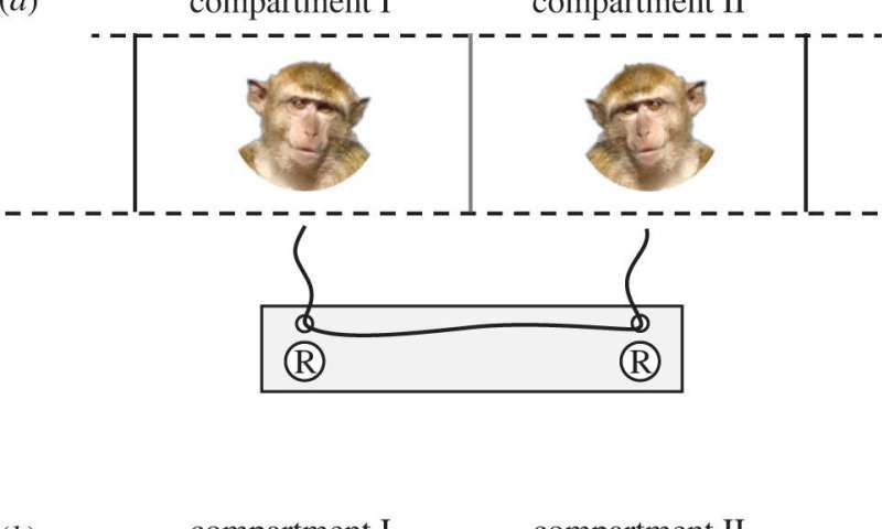 Experiments with macaques show lower stress levels when working with a friend toward a goal