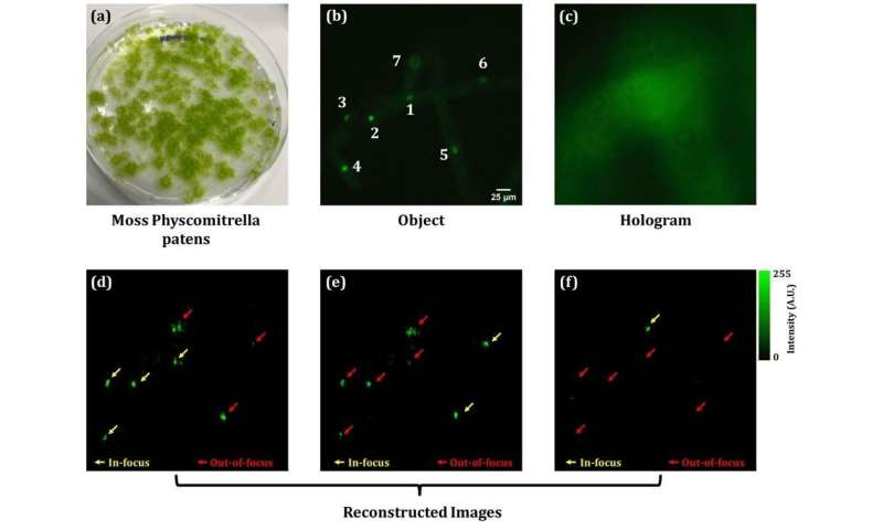 Developing a digital holography-based multimodal imaging system to visualize living cells