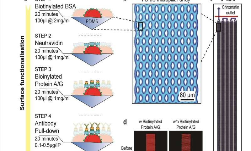 FloChiP, a new tool optimizing gene-regulation studies