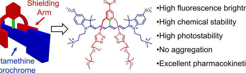 Stable and functional dyes for near-infrared fluorescence imaging of living subjects