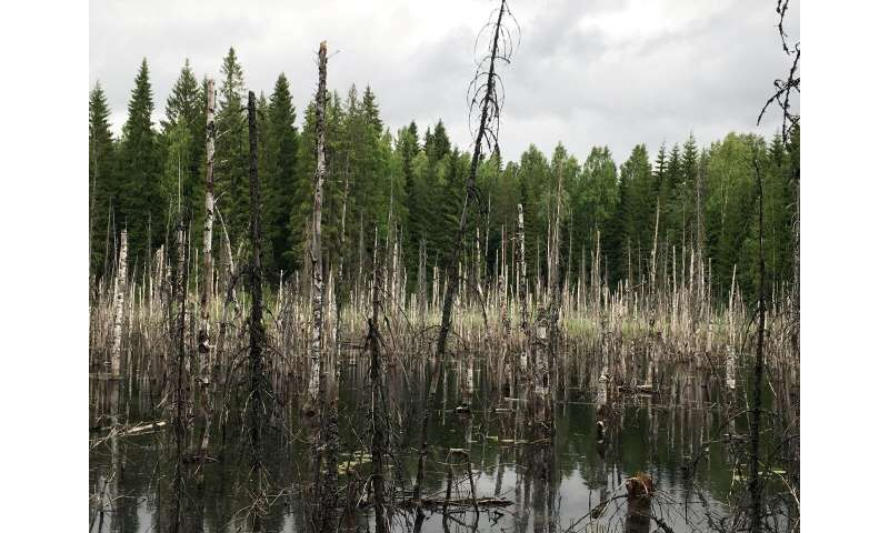 Beavers are diverse forest landscapers