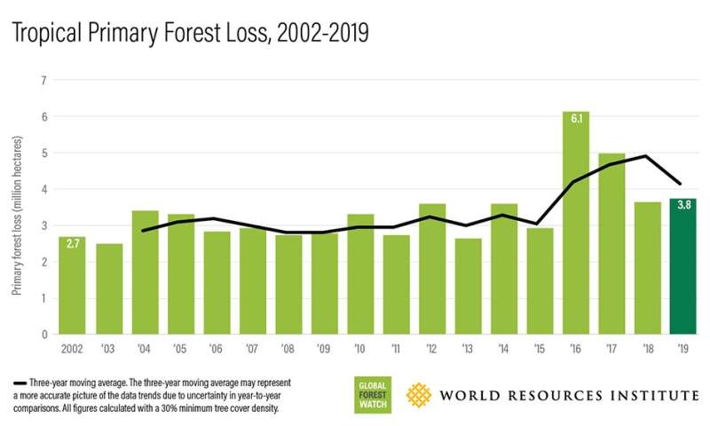 Brazil drives increase in worldwide forest loss