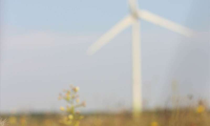 Wind farms in the Black Sea coast region could have a negative impact on bat populations in large parts of Eastern Europe