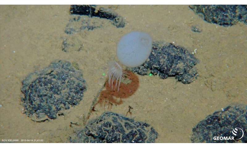 """""""Hard Rock"""" in the deep sea – The road to deciphering biodiversity on the seabed is stonier than previously assumed"""
