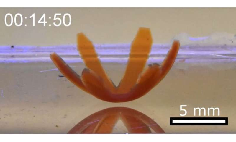 'Robotic soft matter' bends, rotates and crawls when hit with light