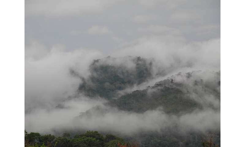 Rainforest in peril – Researchers propose the designation of mountain ranges in Uíge province as a national park