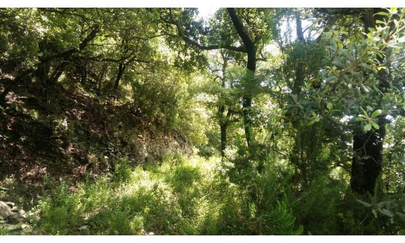 Study characterizes the forest chemistry of the air in a Mediterranean forest