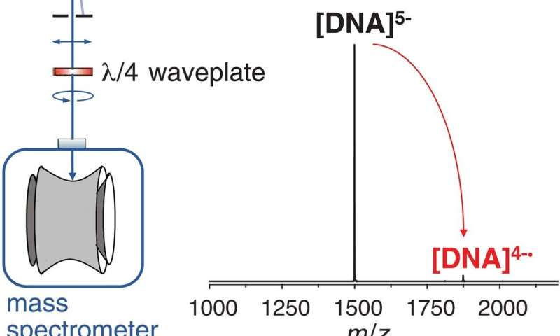 Using mass spectrometry to isolate guanine-rich DNA ions