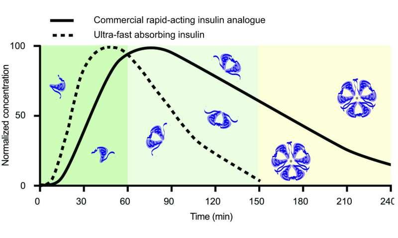 Researchers develop a new ultrafast insulin